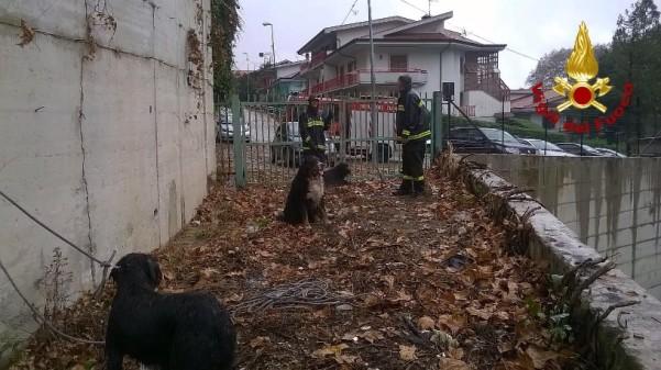 cani vigili del fuoco
